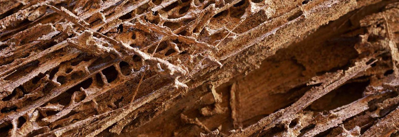 Termite Damage, Termite Inspections, Pest Inspections